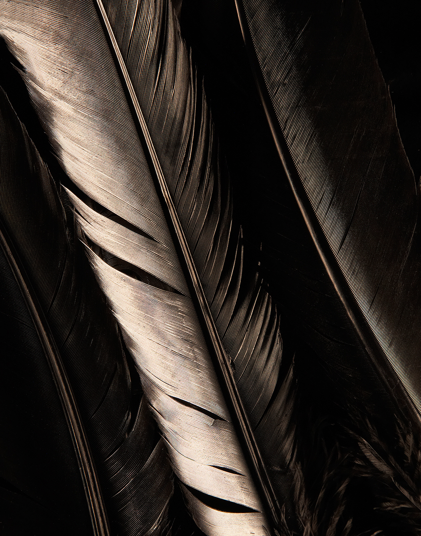0000_Feathers_Sized_Sharpened