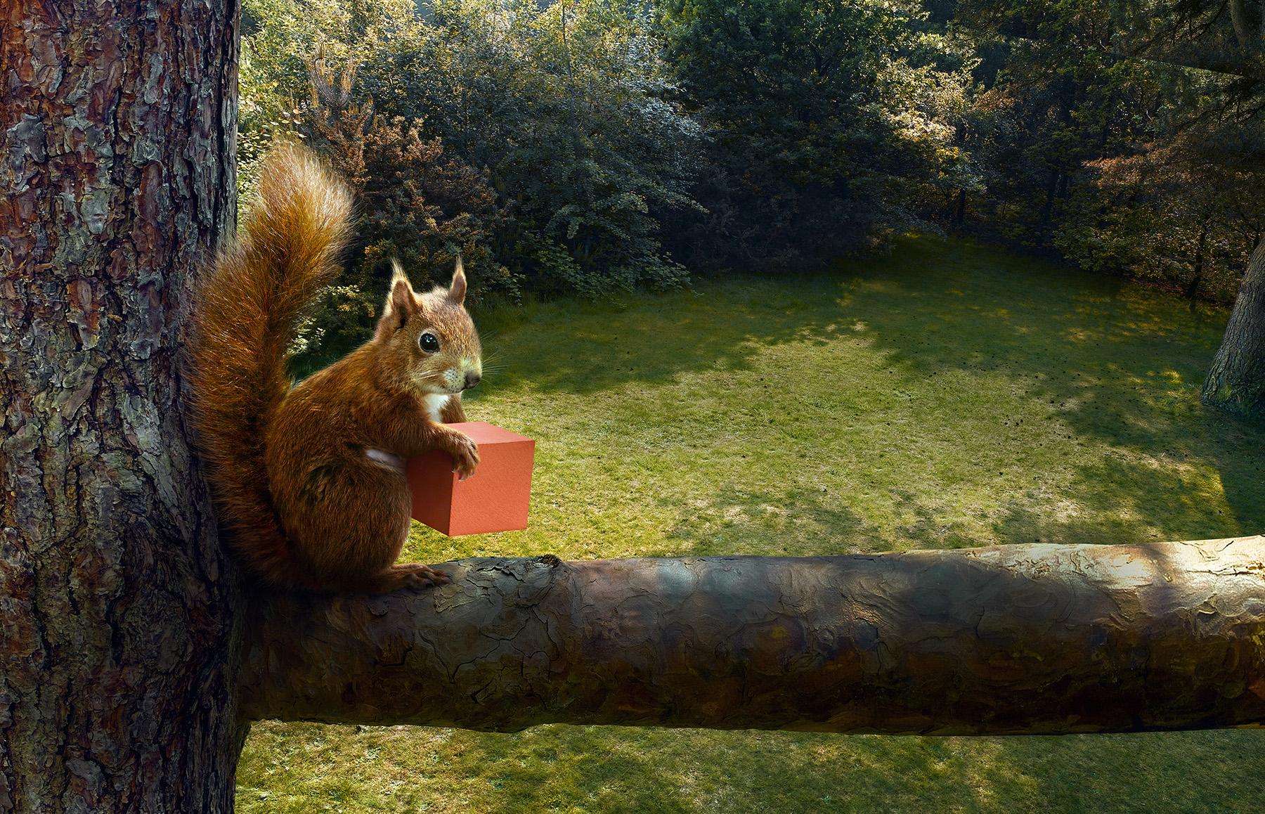 3064_Squirrel_48s_rgb_v2