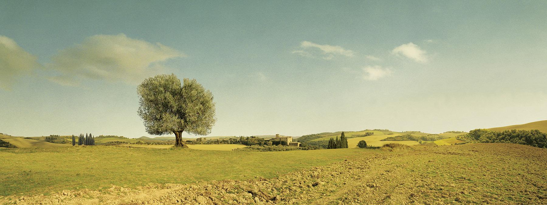 Bertolli_Landscape_2