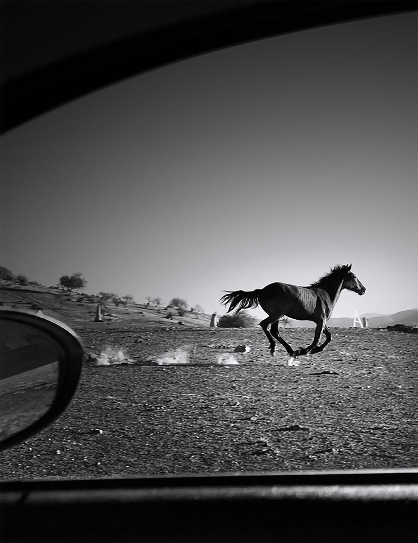 15119_Unlock_Horse_6Jul_IOS_340x262_207304