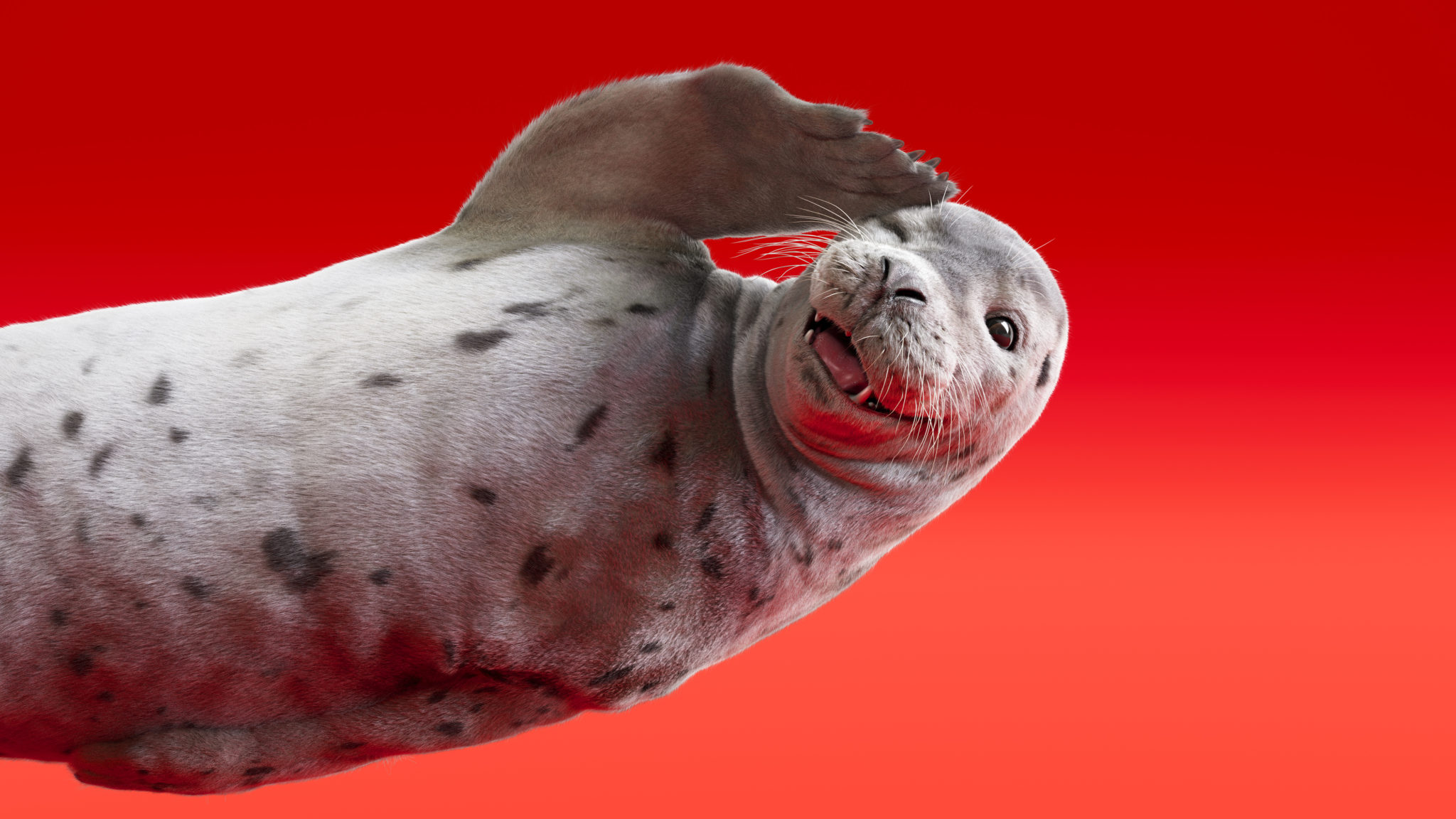 8824_seal_pose_whizz_rgba_v002_RT_R4