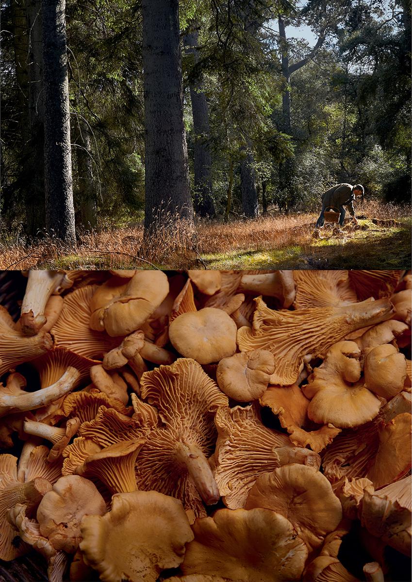 Tesco_Mushroom